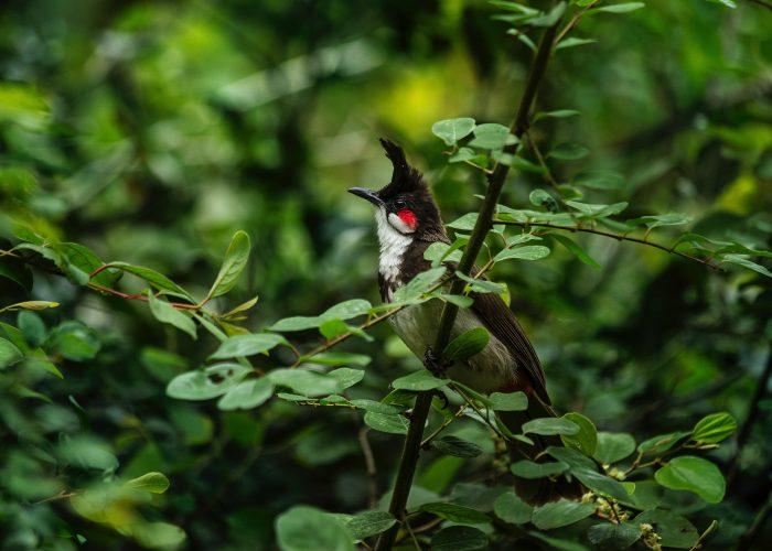 Indien Kerala Madnagui individuel rejse