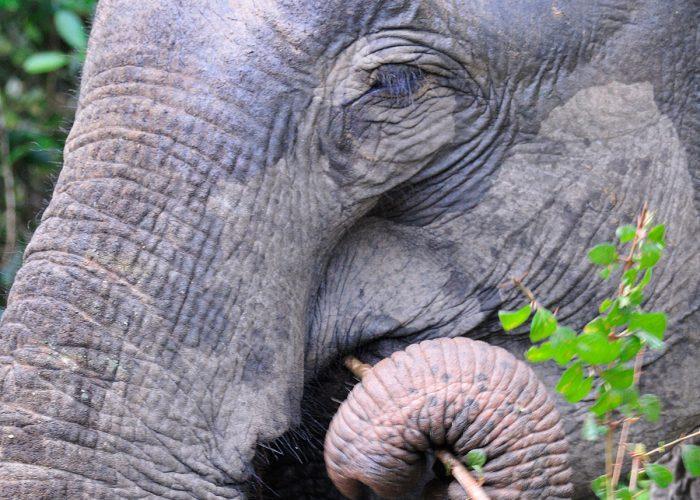 Sri Lanka safari individuel rejse