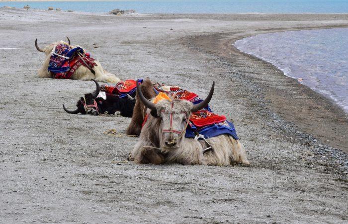 Rejser til Indien Himalaya