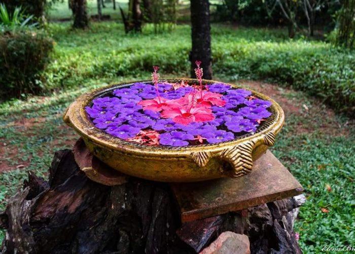 Ayurveda hos Sarovaram