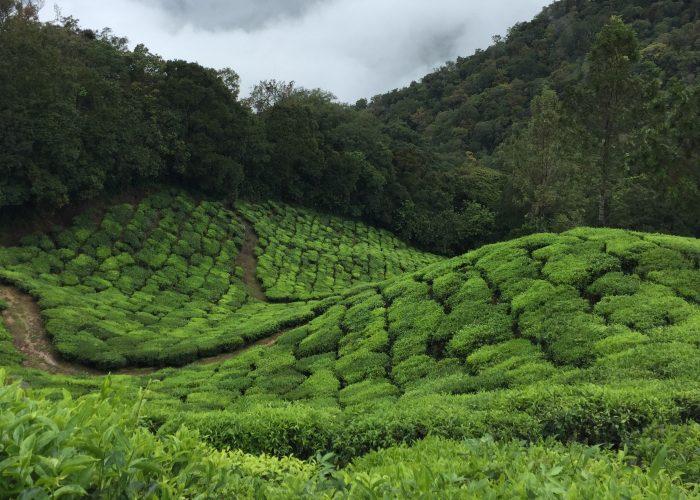 Kerala munnar India